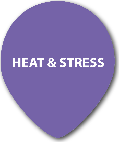 Equine Heat & Stress