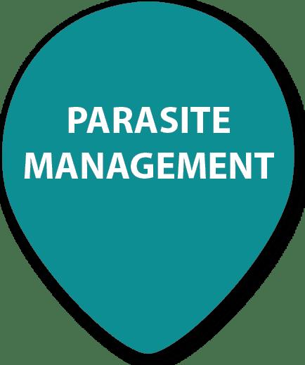 Pet Parasite Management